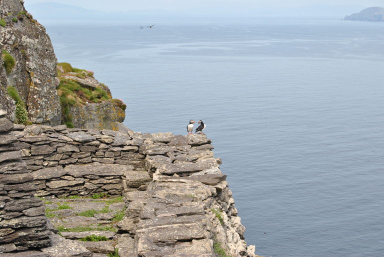 Another view from the monastery atop Skellig Michael. I truly hope the puffins at the edge are engaging in a courting dance as their rituals kept me from standing where Luke Skywalker stood - the very top of the island.
